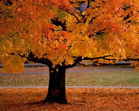 Turismo de bosques y árboles milenarios