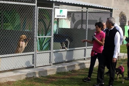 Refugio Perros Metro Cdmx