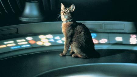 Gato Que Vino Del Espacio