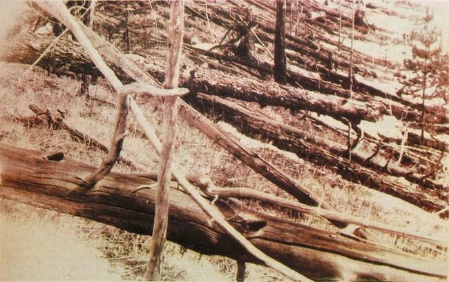 Tunguska Event Fallen Trees