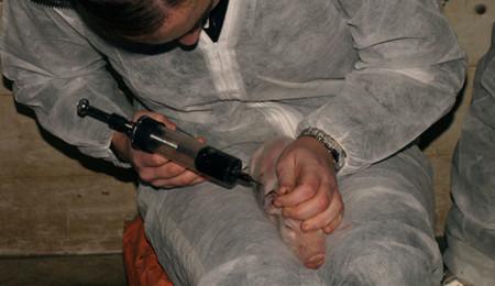 Desinfección de un gorrino