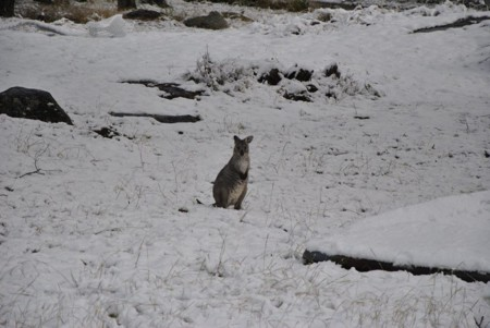 El soleado Queensland en Australia está cubierto de nieve y eso es una verdadera locura