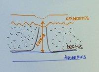 Cómo se forman las estrías de distensión en la piel de la embarazada