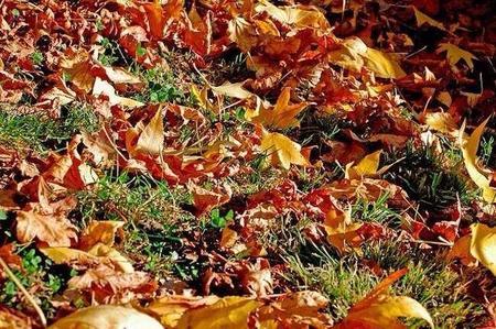 Disfruta del otoño con los peques
