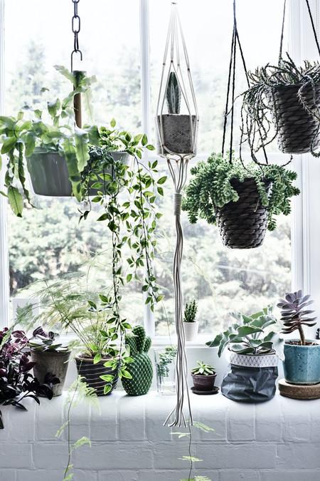 Ikea Plantas Ph148940