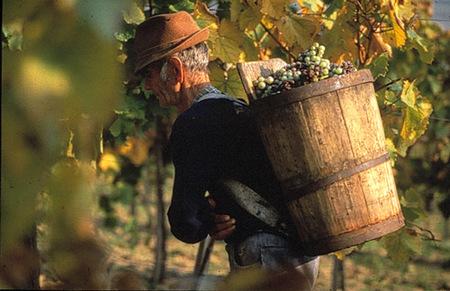 El Tokay, rey de vinos, vino de reyes