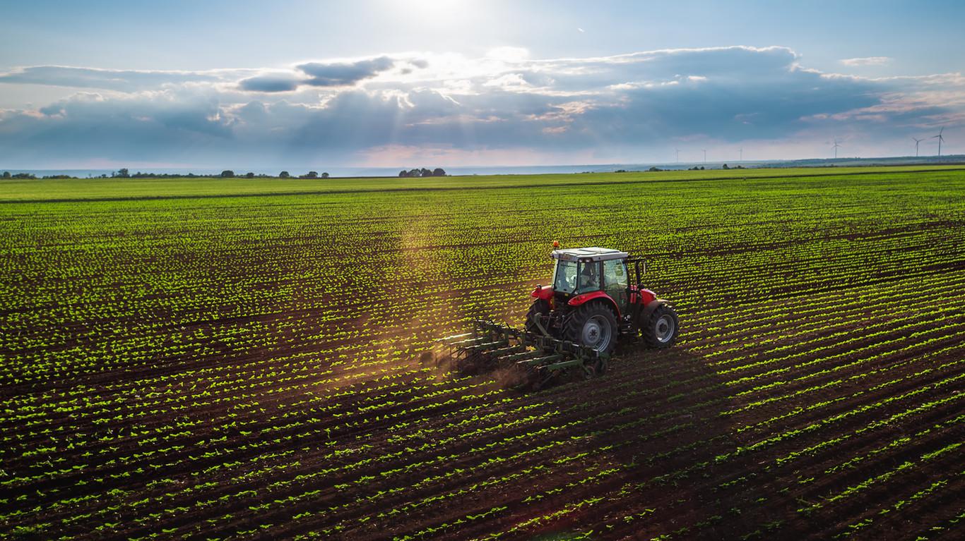 Por qué vivir en el campo es beneficioso para nuestra salud