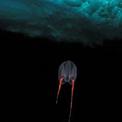 Foto 31 de 34 de la galería underwater-competition en Xataka Foto