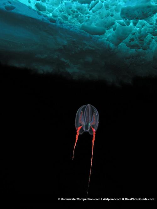 Foto de Underwater competition (31/34)