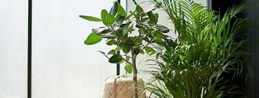 Las mejores plantas naturales (clásicas, de tendencia o de Navidad) que podemos encontrar en Ikea