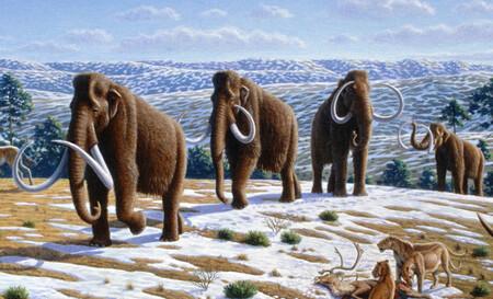 Nuestras capacidades cognitivas superiores se dearrollaron porque extinguimos a los grandes animales