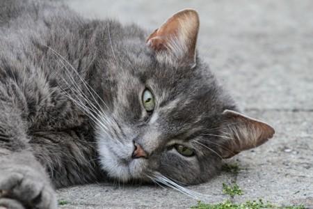 Cat 1524308 1920