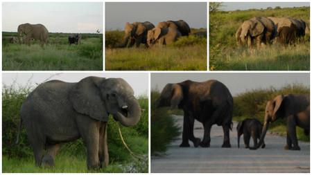 grupo familiar de elefantes