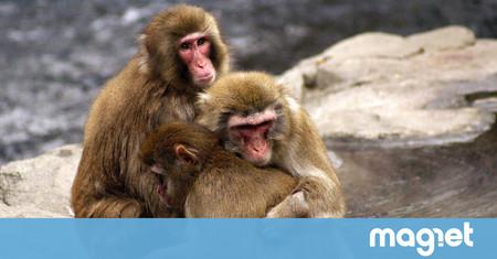 La empatía es tan esencial para nuestras relaciones sociales que hasta los animales la tienen