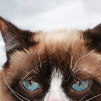 Grumpy Cat muere (enfadada) a los siete años: adiós a la gata de Internet con más millones en todos los sentidos