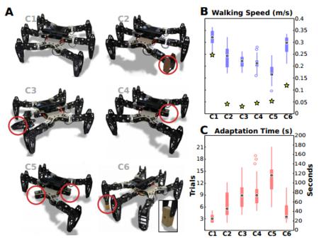 Estos robots se rompen una o varias extremidades pero vuelven a caminar en dos minutos