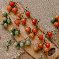 Tomates crudos o cocinados: ¿cuál es la mejor opción de consumo?