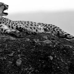 Foto 11 de 12 de la galería la-belleza-animal-en-blanco-y-negro en Xataka Foto