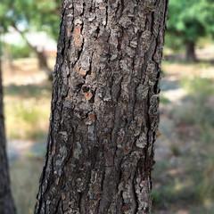 Foto 19 de 29 de la galería blackberry-key2-fotografias en Xataka