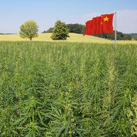 China también se apunta a la fiebre de la marihuana (pese a prohibirla estrictamente)