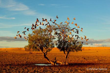 Un dragón marino y otras sugerentes imágenes ganadoras del certamen Australian Geographic Nature Photographer of the Year 2021