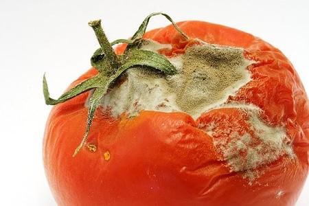 Rotten Tomatoreal