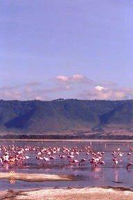 Cráter del Ngorongoro: el edén de Tanzania