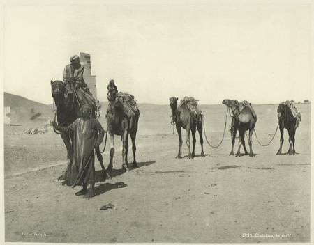 Viajar al Egipto de 1870, cómo salvar el Amazonas con fotos, fotos de comida que no lo parecen y más: Galaxia Xataka Foto