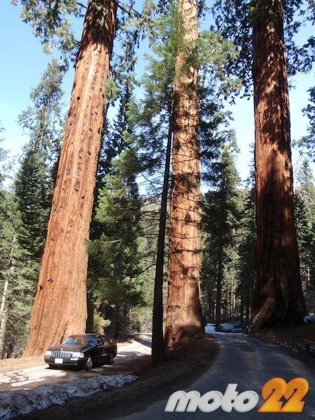 4-6-california-m22.jpg