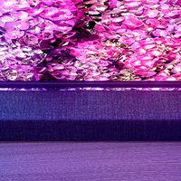 Philips amplía su alianza con Bowers & Wilkins: a partir de septiembre presentarán nuevas teles OLED y LCD