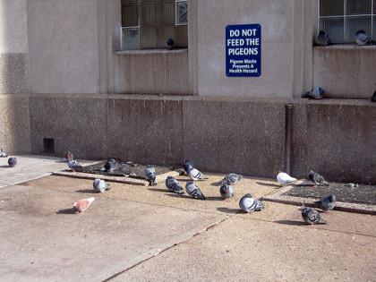 Dar de comer a las palomas en New York... 1.000 $