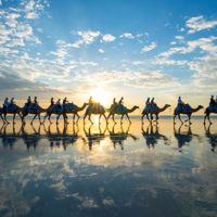 Las caravanas de camellos no son sólo para el desierto, descubre Broome en Australia