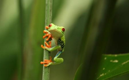 """Froggipedia y Boulevard AR: la realidad aumentada es mucho más que una bonita """"demo"""""""