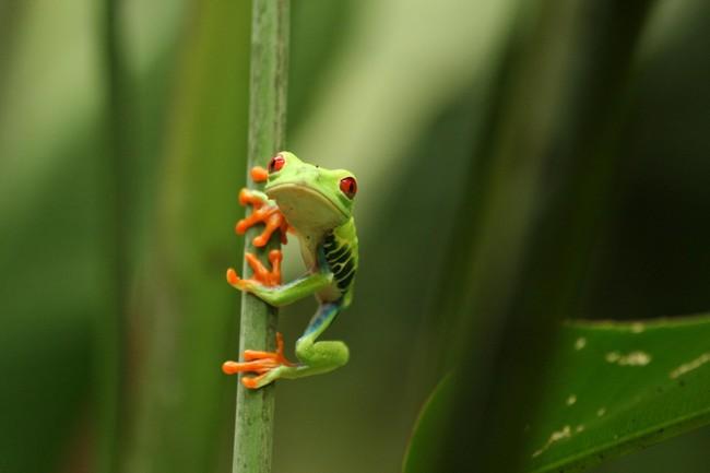 Froggipedia Realidad Aumentada