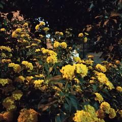 Foto 18 de 22 de la galería xiaomi-mi-mix-2-fotografias en Xataka