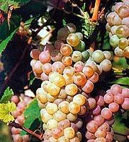 La Generalitat Valenciana desea potenciar sus vinos a través de un nuevo Instituto Tecnológico de Viticultura y Enología