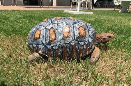 Tortoise 3d Printed 02