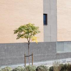 Foto 19 de 49 de la galería milvus-35 en Xataka Foto