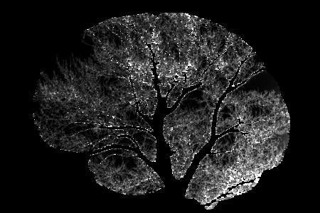 Brain 2139197 1920