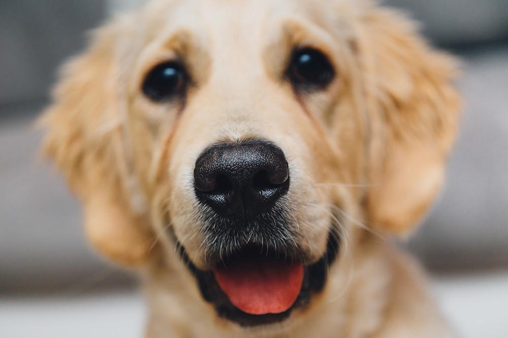 Como Fotografiar Mascotas I Perros 4