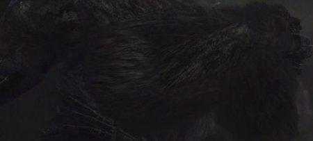 Shadow of The Colossus HD: Barba