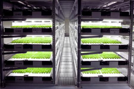 Esta fábrica es el terror de los agricultores: cultivará medio millón de lechugas al día de forma automática
