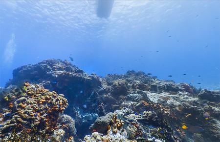 Google Maps añade arrecifes mexicanos a Street View