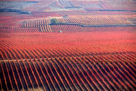 Viñedos otoño La Rioja