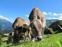 ¿Cómo podemos desembarazarnos de una vaca congelada peligrosa?