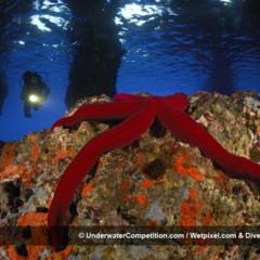Foto 26 de 34 de la galería underwater-competition en Xataka Foto