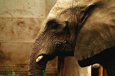 La metáfora del elefante que olvidó su fuerza