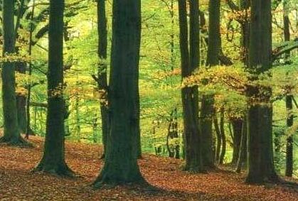 Tecnología para proteger los bosques