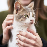 La ciencia detrás de acariciar a tu gato correctamente