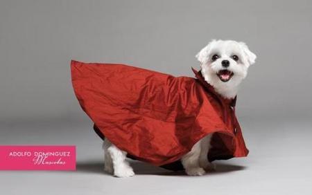 AD mascotas y que llueva